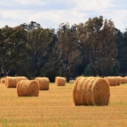 SISAL ROUND BALE TWINE, Committed AG