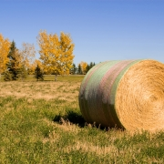 Committed AG | Canada Wrap bale in the field