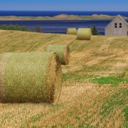 Committed AG | Committed HD bales in the field